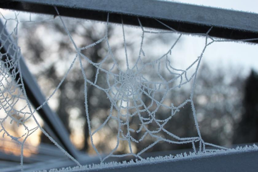 IMG_4871-Garden-ice