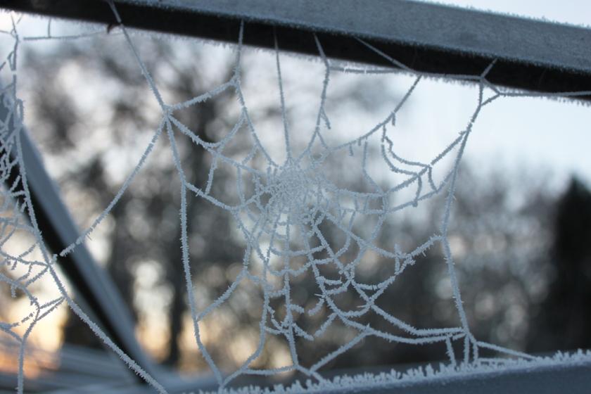 IMG_4872-Garden-ice