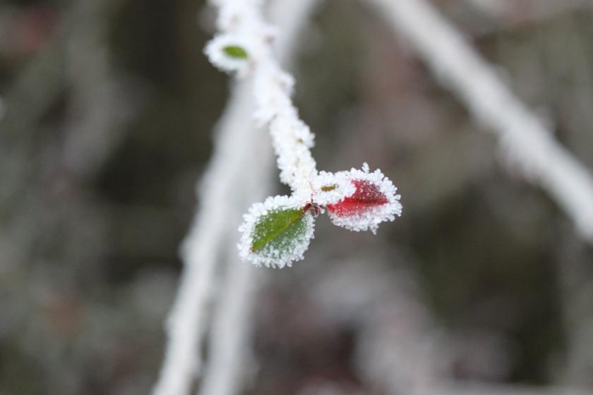 IMG_4888-Garden-ice