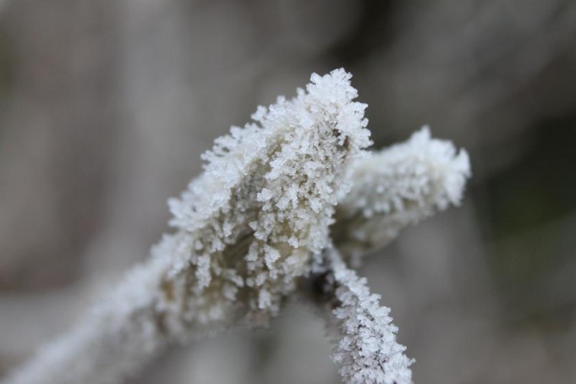 IMG_4890-Garden-ice