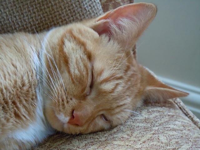 sleepy cat 2