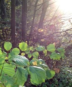 crop iinov-garden-3