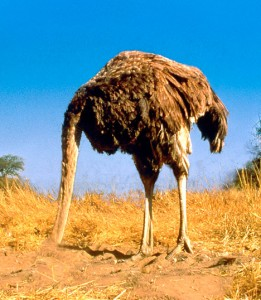 ostrich_468x538